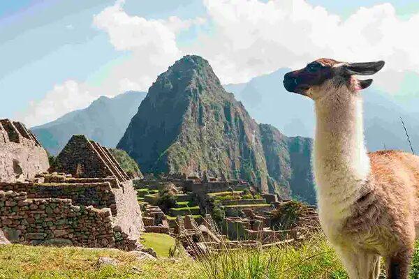 Las Alpacas en el Perú