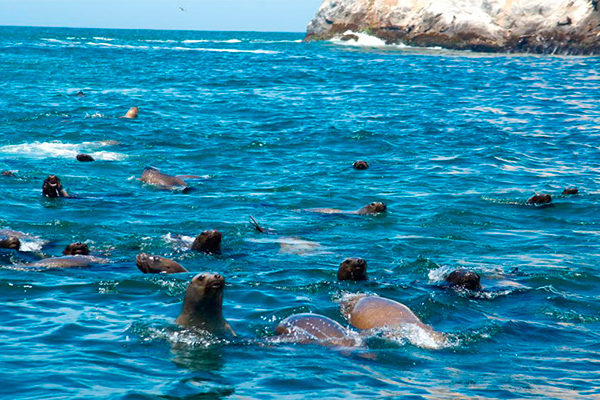 Las Maravillosas Islas Palomino