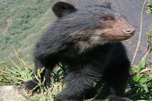 La Flora y Fauna de Machu Picchu