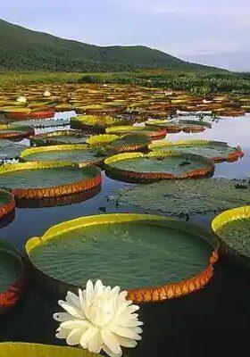 Pantanal – Brasil: El ecosistema más rico en biodiversidad del mundo